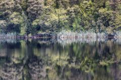Spiegelung Lake Matheson, NZ