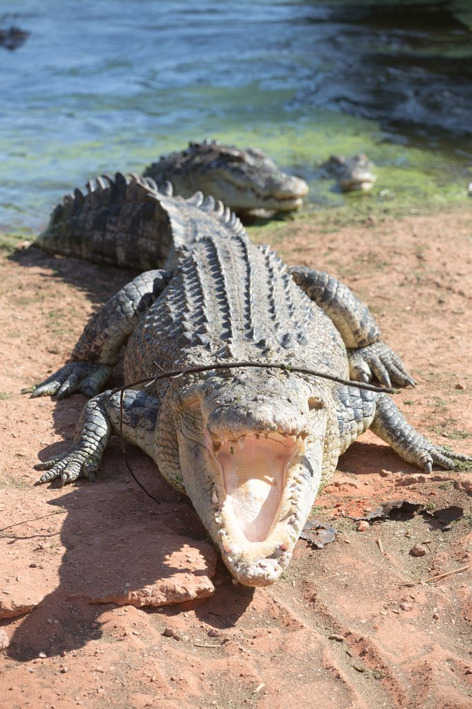 Hungrig, Crocodile Park, Broome WA